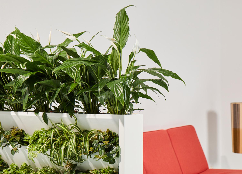 gr ne w nde bellaflora. Black Bedroom Furniture Sets. Home Design Ideas