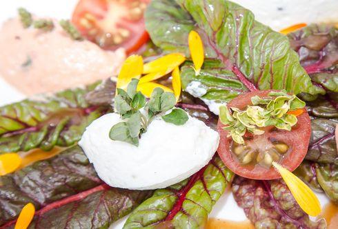 """Feurio""-Mangold Salat mit Frischkäse Pralinen"