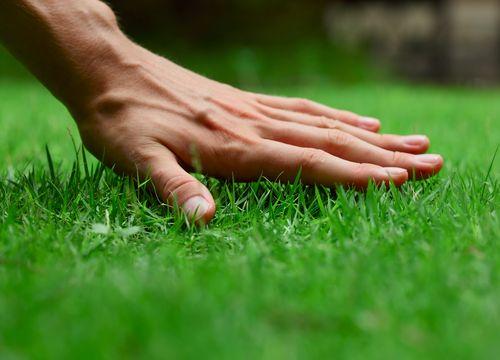 Rasen anlegen und pflegen in Steyr