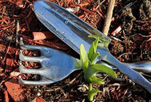 Einpflanzen von Bäumen und Sträuchern