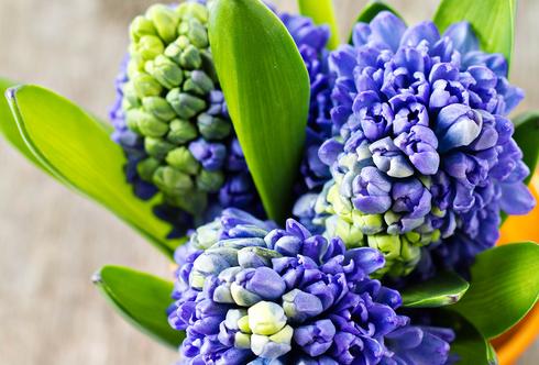 Frühlings-Arrangements für Zuhause