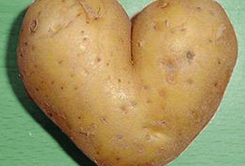 Die eigene Kartoffelernte