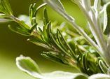 JETZT: Kräuter Auspflanzen!