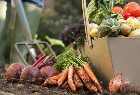 Gesundes Gemüse - Schritt 1: Gemüsesaatgut säen