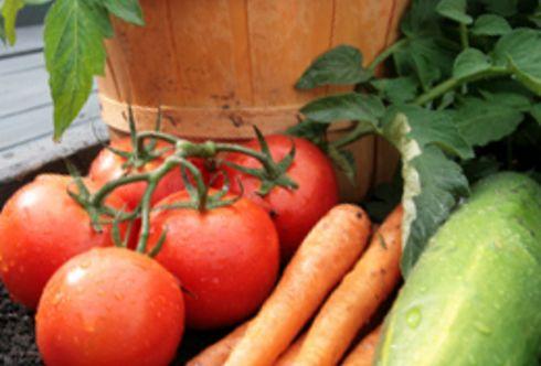 Mischkultur: mit Struktur durchs Gemüsejahr