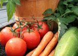 Ganzjahresgemüse: Mit Struktur durchs Gemüsejahr