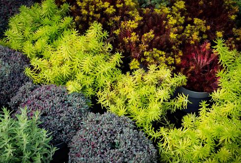 Tipps zur Grab-Dauerbepflanzung