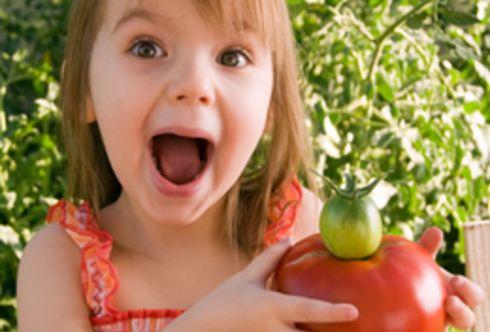 """Tomate - der """"Liebesapfel"""" - richtige Pflege"""