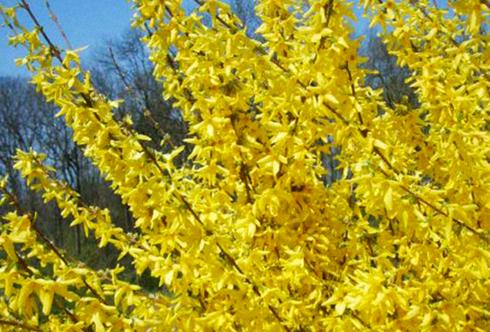 Blütenzauber zum Frühlingsstart