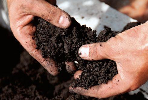 Gesundes Gemüse - Schritt 4: Bodenverbesserung