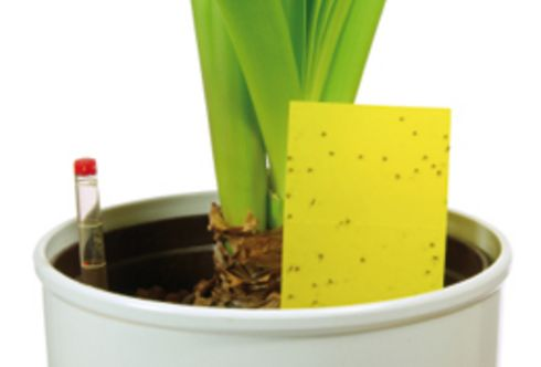 Zimmerpflanzen – So gedeihen sie auch im Winter