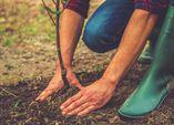 Herbstpflanzung von Bäumen und Sträuchern
