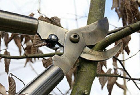Rückschnitt: Obstbaumschnitt - allgemein