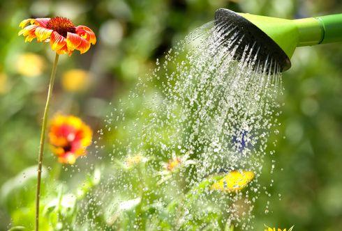 7 Hitzeschutztipps für Pflanzen