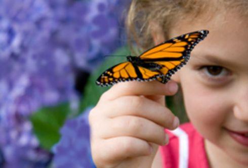 Schmetterlingsmagnet