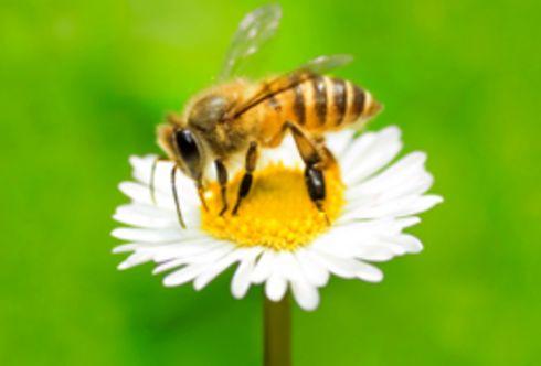 Unbeschwerte Gartenfreuden im Naturgarten – Ein Lebensraum für Insekten