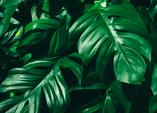 Prima Klima durch Zimmerpflanzen