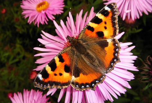 Ohne Schmetterlinge keine Blumen. Und umgekehrt.