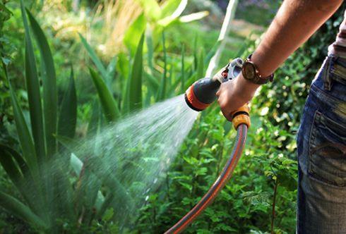 Bewässerung: Machen Sie Ihre Pflanzen fit für die Urlaubszeit!