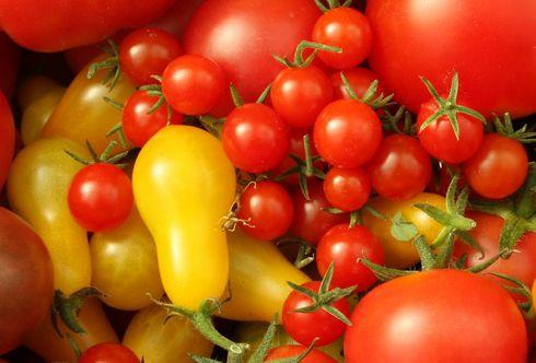 Die bunte Vielfalt der Tomatenwelt