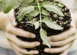 Gesundes Gemüse - Schritt 3: Pflanzgemeinschaften und Fruchtfolge