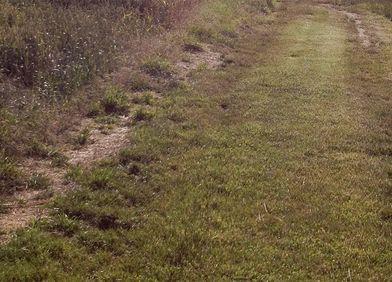 Bodenverdichtung: Laufwege