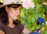 Rosenschnitt und -pflege bei Krankheiten und Schädlingen