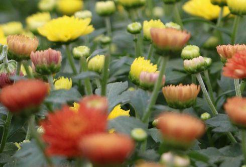 Gartenwissen Bellaflora