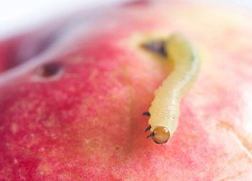 Obstmaden