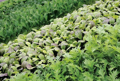 Rezepte Asia-Salate