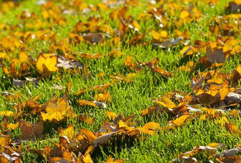 Rasenpflege im Herbst - 5 grasgrüne Regeln