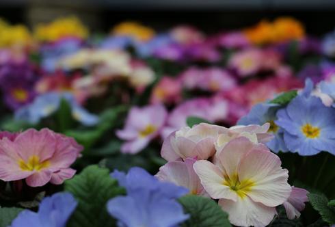 Der Frühling sprießt