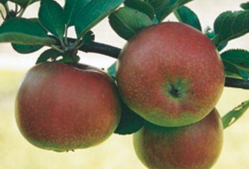Mai: Jetzt braucht uns der Obstgarten!