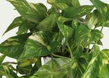 Das ABC der Winterpflege - So kommen Ihre Zimmerpflanzen gut in den Frühling!
