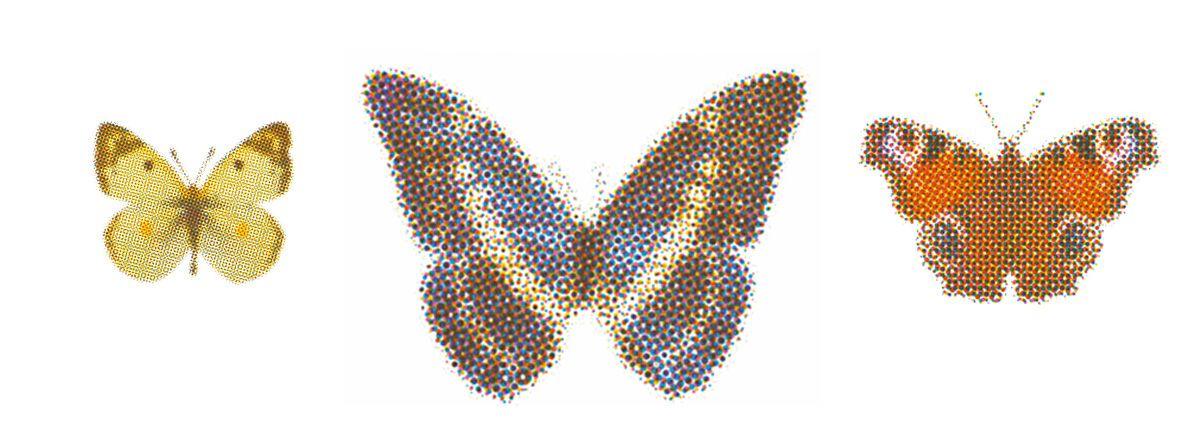 Ohne Schmetterlinge Keine Blumen Bellaflora