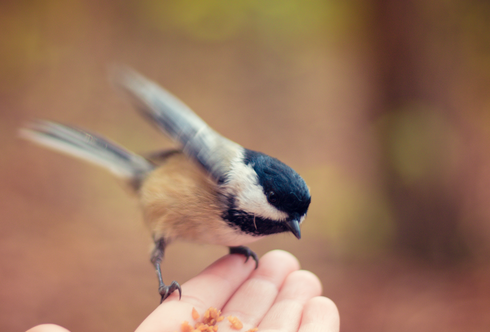 Wir retten die Wildvögel!
