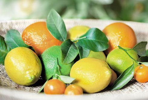 Zitruspflanzen - Eine duftende Reise nach Sizilien