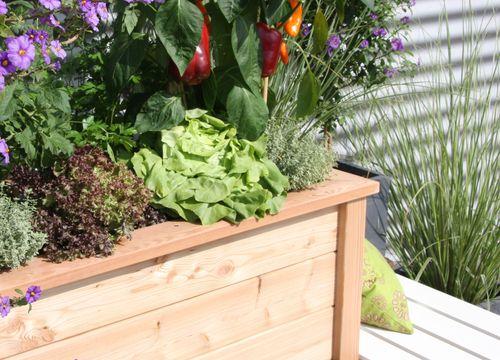 Hochbeet - Befüllung, Bepflanzung und Pflege in Eisenstadt