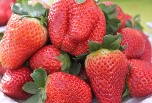 Erdbeere - Königin der Früchte