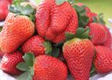Erdbeere – Königin der Früchte