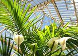Mit Palmen wohnen