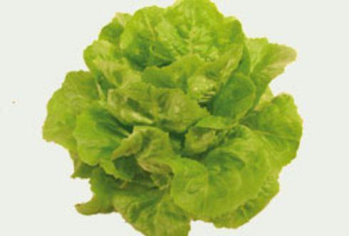 Salate: Von der Anzucht bis zur Ernte