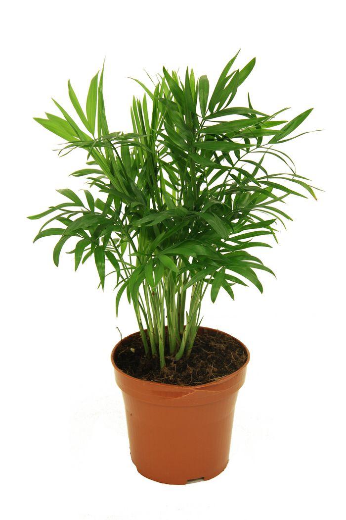 palmen & co. | bellaflora, Hause deko