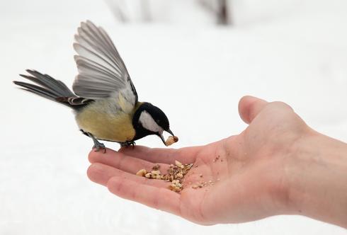 Die schönsten Geschenke der Natur