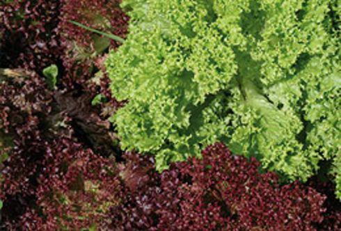 Gemüse zur richtigen Tageszeit ernten