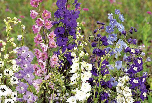 Ein tolles Team: Sommerblumen und Prachtstauden
