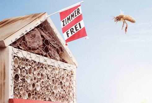 Nützlingshotels - Ihr Weg zum Hotelier!