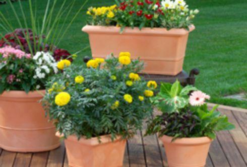 Pflanzen – ab ins Freie!