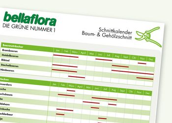Schnittkalender Baum- und Gehölzschnitt