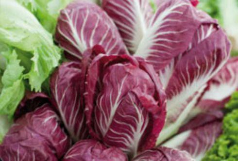 Salat für Herbst und Winter jetzt säen